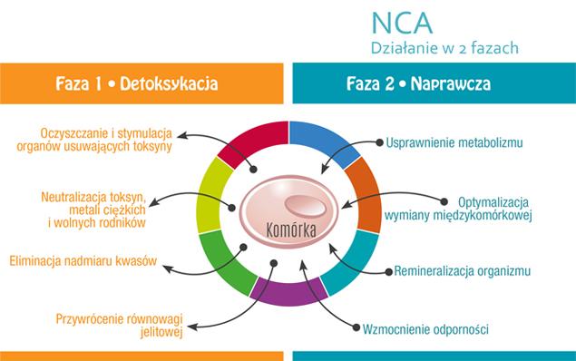 NCA Działanie w 2 fazach